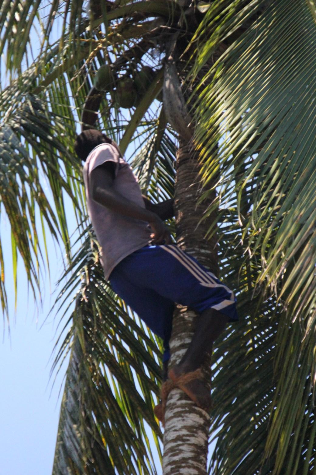 Coconut Climber; Stone Town, Zanzibar, Tanzania; 2011