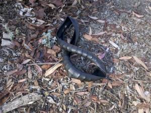 bike tire snake