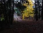 Pennsylvania house gravel driveway leaves late autumn