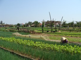 farm workers squatting Asia