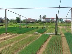 working farm in central Vietnam