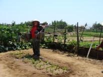 watering plants farming