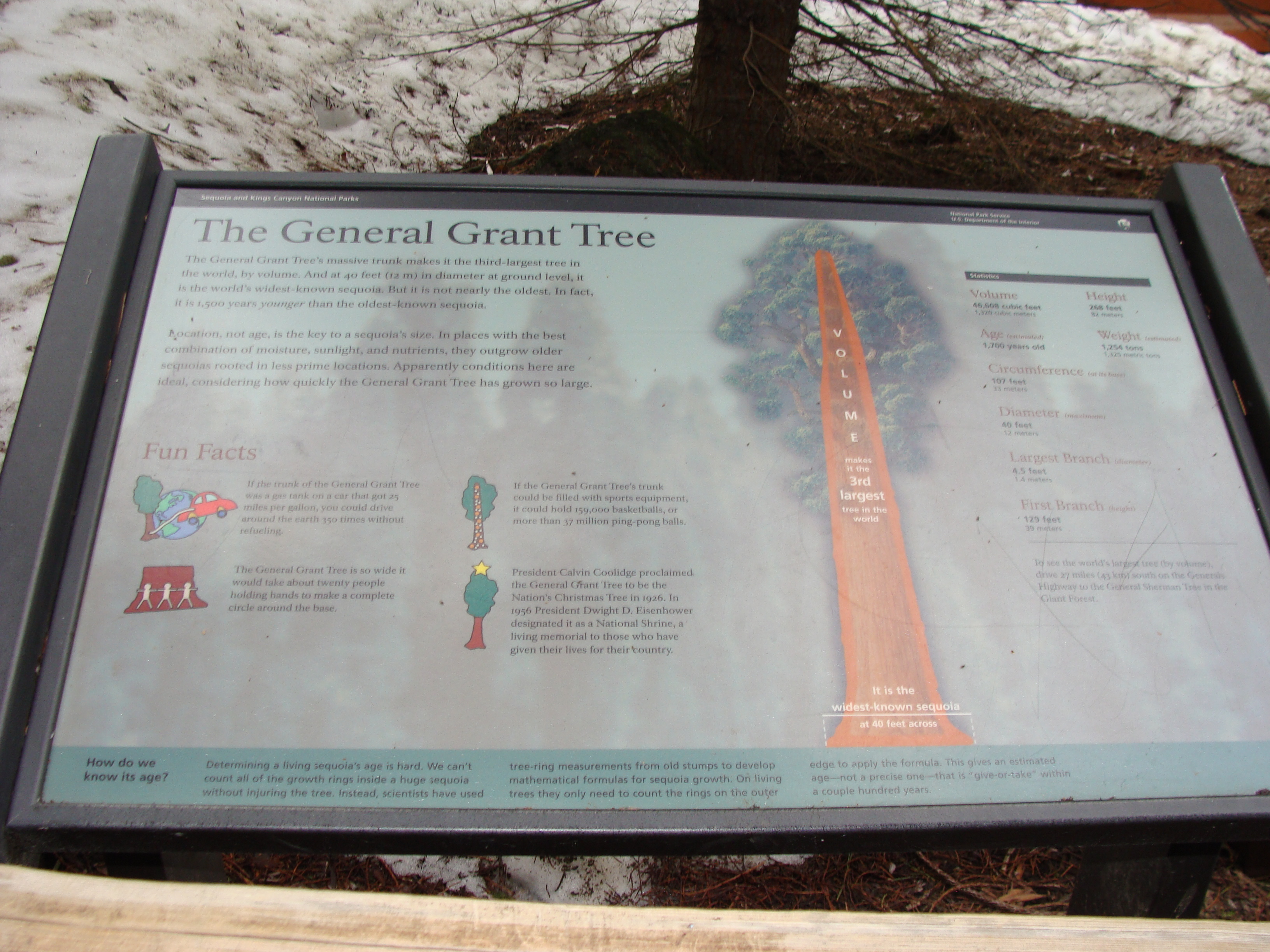 Cool info sign at the General Grant Tree