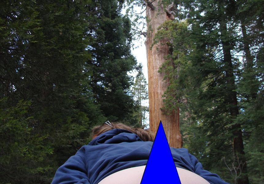 King's Canyon Sequoia Tree
