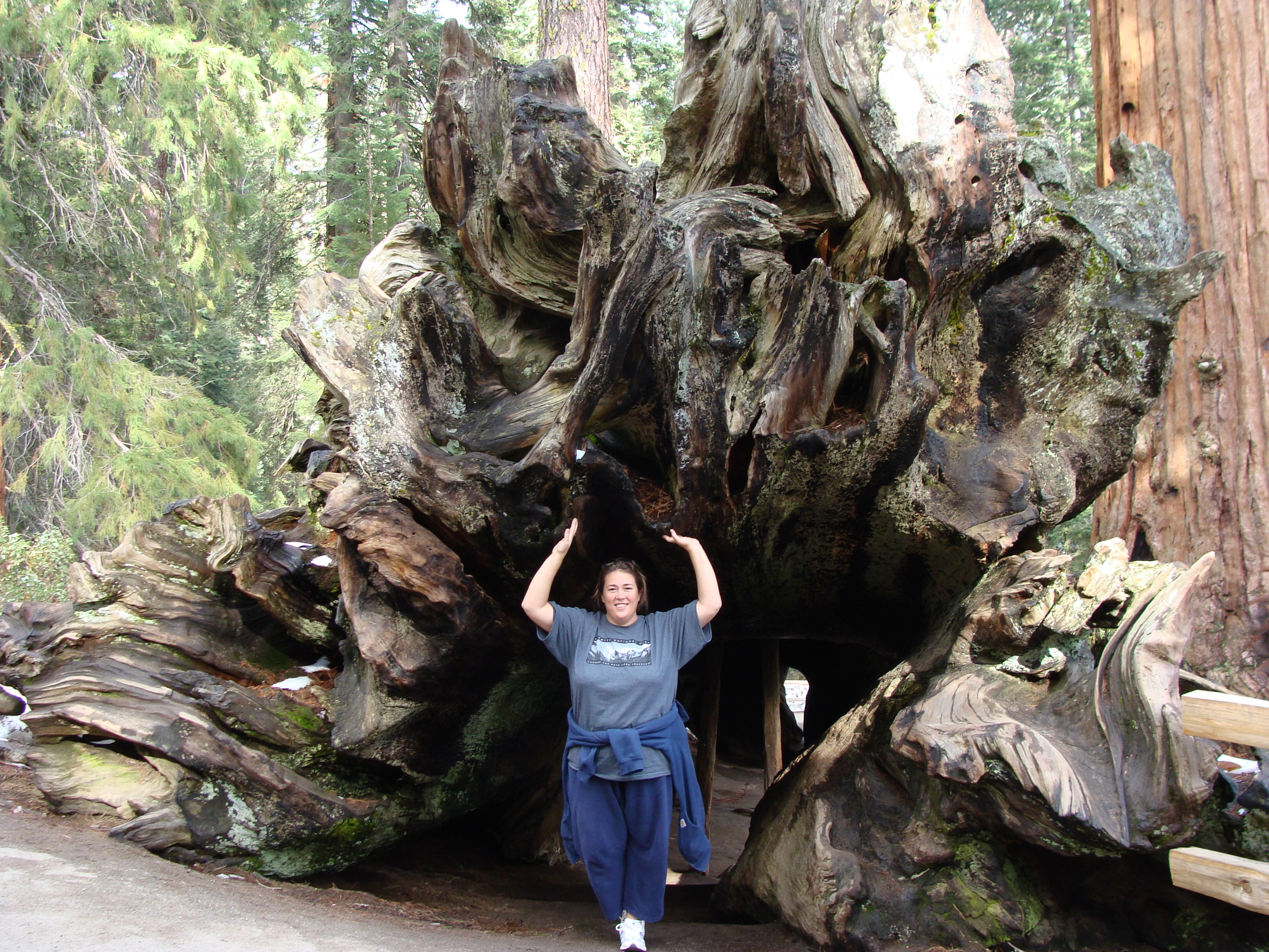 Standing in a fallen sequoia tree in King's Canyon National Park