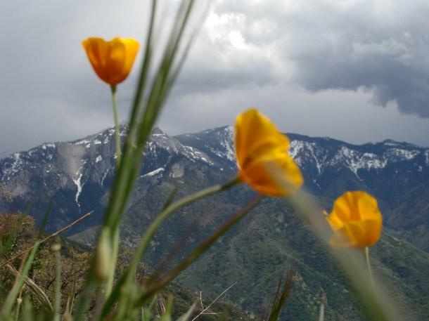 Sequoia National Park overlook