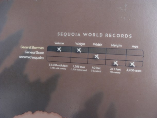 Cool sequoia tree facts