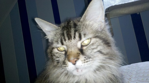 animal euthanasia cancer treatment in cats when to put your pet to sleep