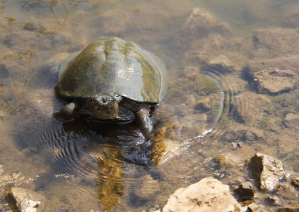 turtles in Kruger National Park expat life Pretoria South Africa travel