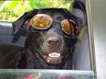 Our own hipster ArtDOG, Baxter