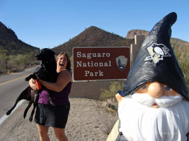 The Marla, The Baxter, The Pens Travel Gnome. Saguaro National Park.