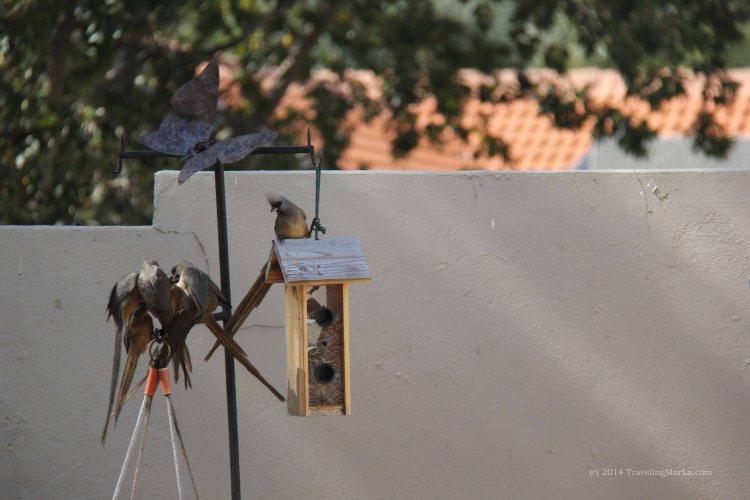 travel Africa mousebirds