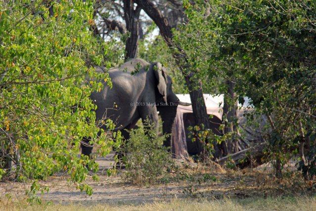 travel Africa Botswana wild camping