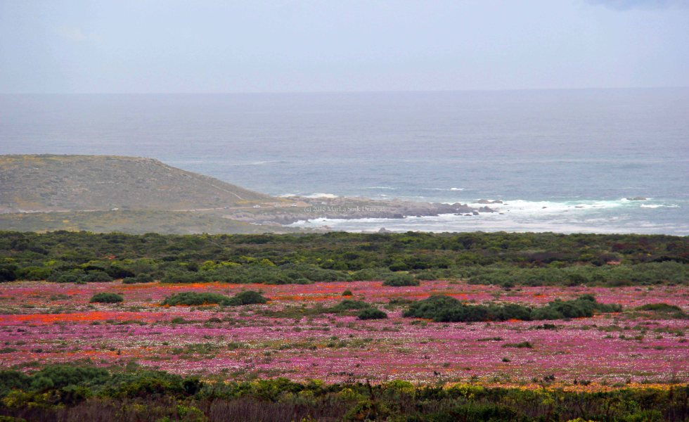 Postberg Flowers travel South Africa