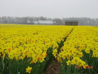 Flower Fields04