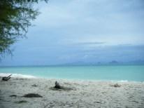 bamboo-island02