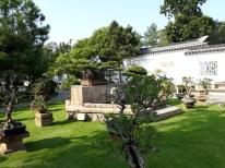 Chinese Garden - Bonsai garden11