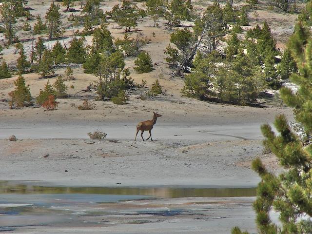 The elk is ok
