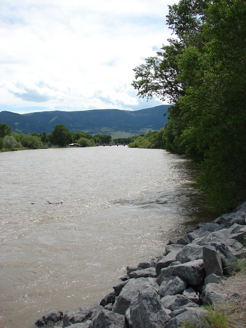 View of the Yellowstone downstream of the bridge.