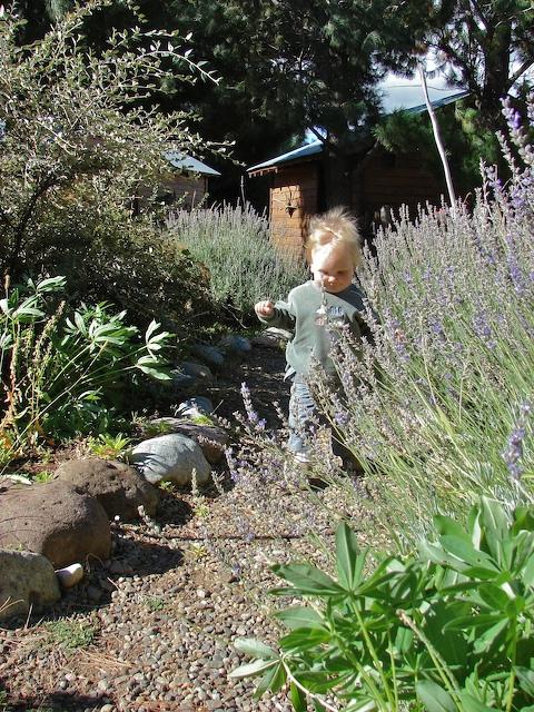 Anders walks through lavender