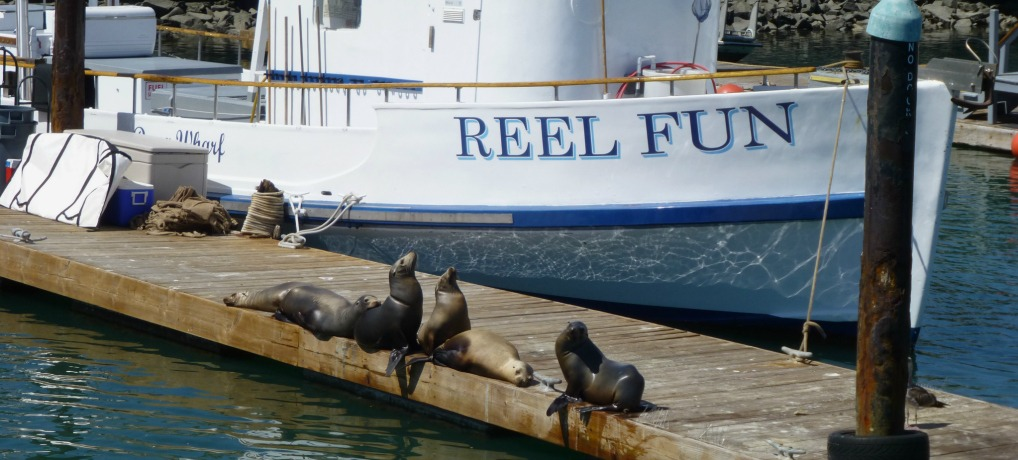 Sea lions on the dock in front of Dana Wharf Whale Watching boat, the Reel Fun.