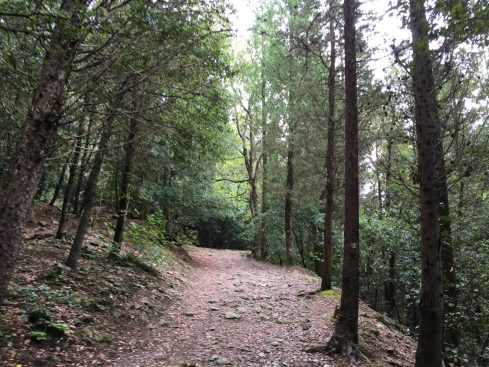 Trails in Fiesole