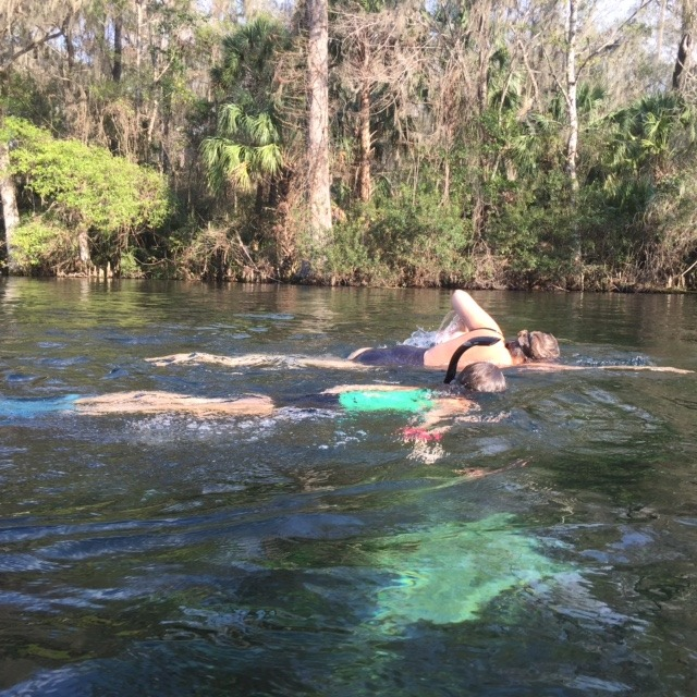 Outdoor winter traditions include swimming with manatees at Crystal Cove