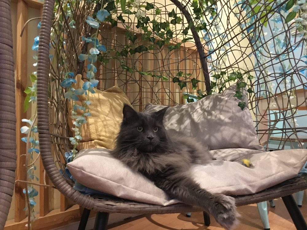 edinburgh attractions for families include the cat cafe