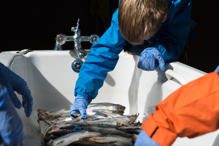 fish feeding at Seal Rescue Ireland