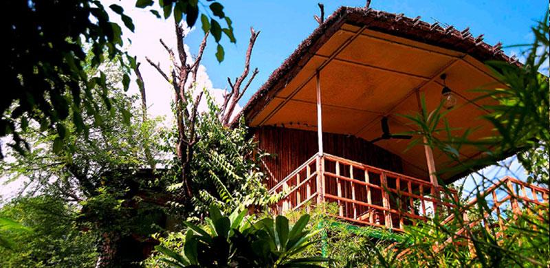 The Tree House Resort, Jaipur, Rajasthan