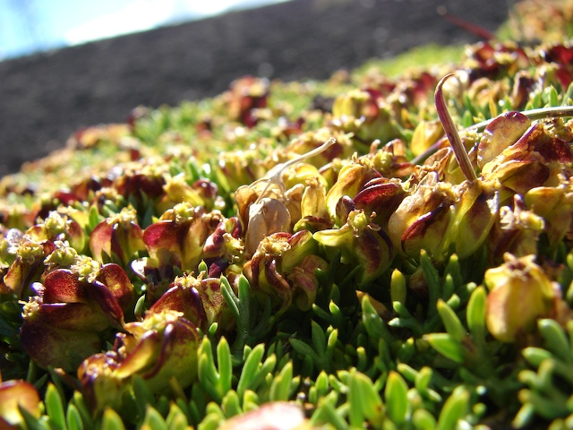 plants on the mountain