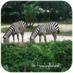 Day 6: Singapore Zoo and Maxwell Food Center