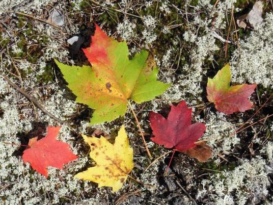 autumn mosaic 1