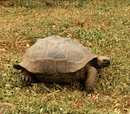 Staying positive looking at Galapagos tortoise picture