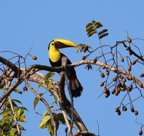 Staying positive looking at toucan picture