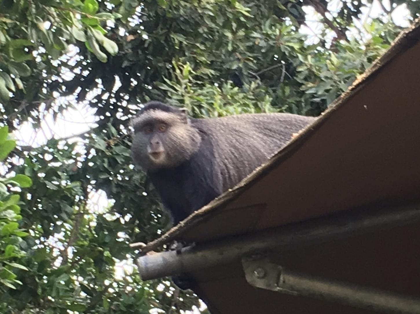 Visit Kenya and Tanzania and see monkeys