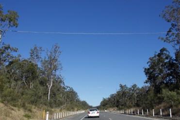 A koala bridge!