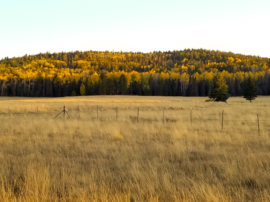 Fall foliage near Greer, one of the best small towns in Arizona.