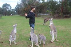 Facing off with a Hungry Kangaroo