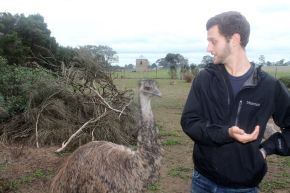 Attempting to Safely Feed an Emu