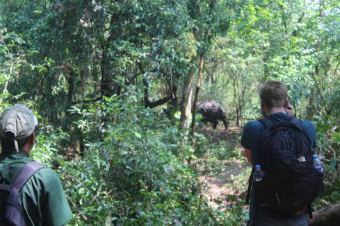 Retreating Rhino