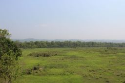 Open Plains with Jungle in Background