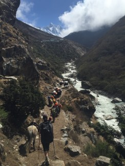 Yaks Crowding the Road to Debuche