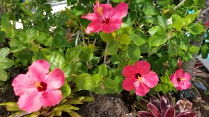 photo of pink tropical flowers