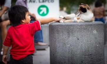 playful human, responsive cat