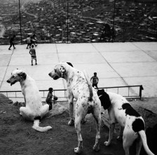 the three dogs and the game