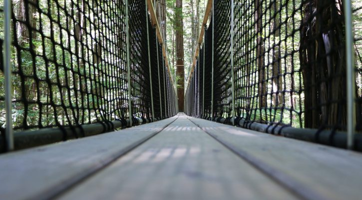 Redwoods Treewalk, Rotorua