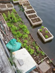 Vegetable garden on the lake