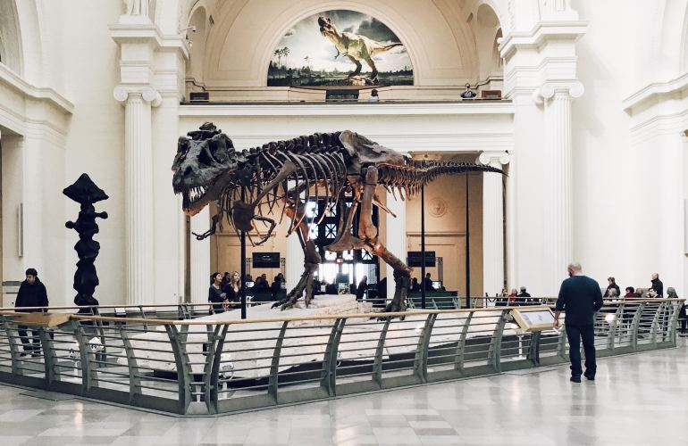 Sue the Tyrannosaurus Rex at the Field Museum of Natural History-Things to do in Chicago indoors with kids