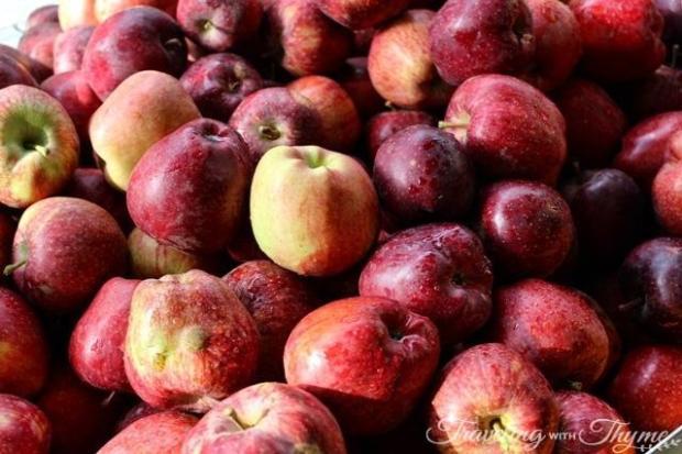 Lebanese Apples Red
